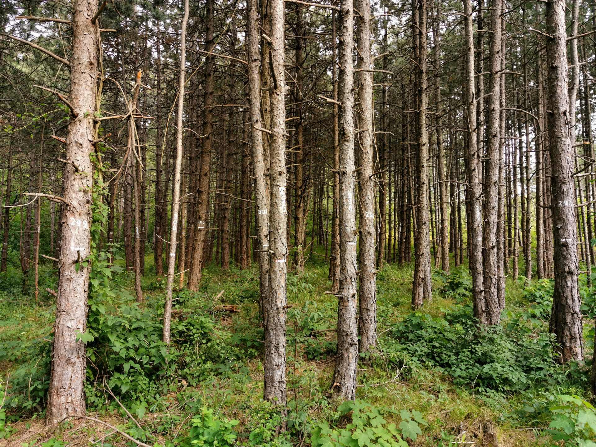 Nullfläche - hier wurde kein Baum gefällt
