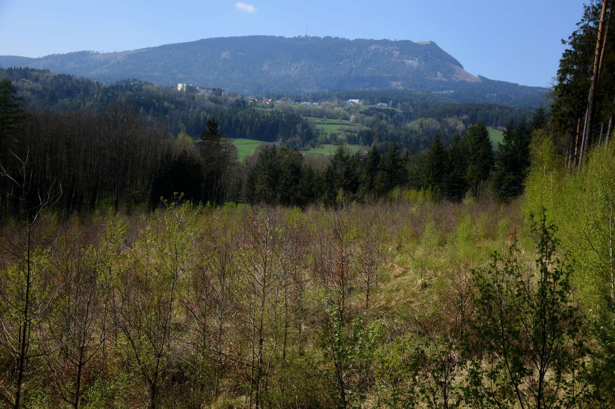 Auf 1,16 ha wachsen Vogelkirschen, Rotbuchen, Stieleichen und Winterlinden. Im Hintergrund sieht man den Grazer Hausberg, den Schöckl.