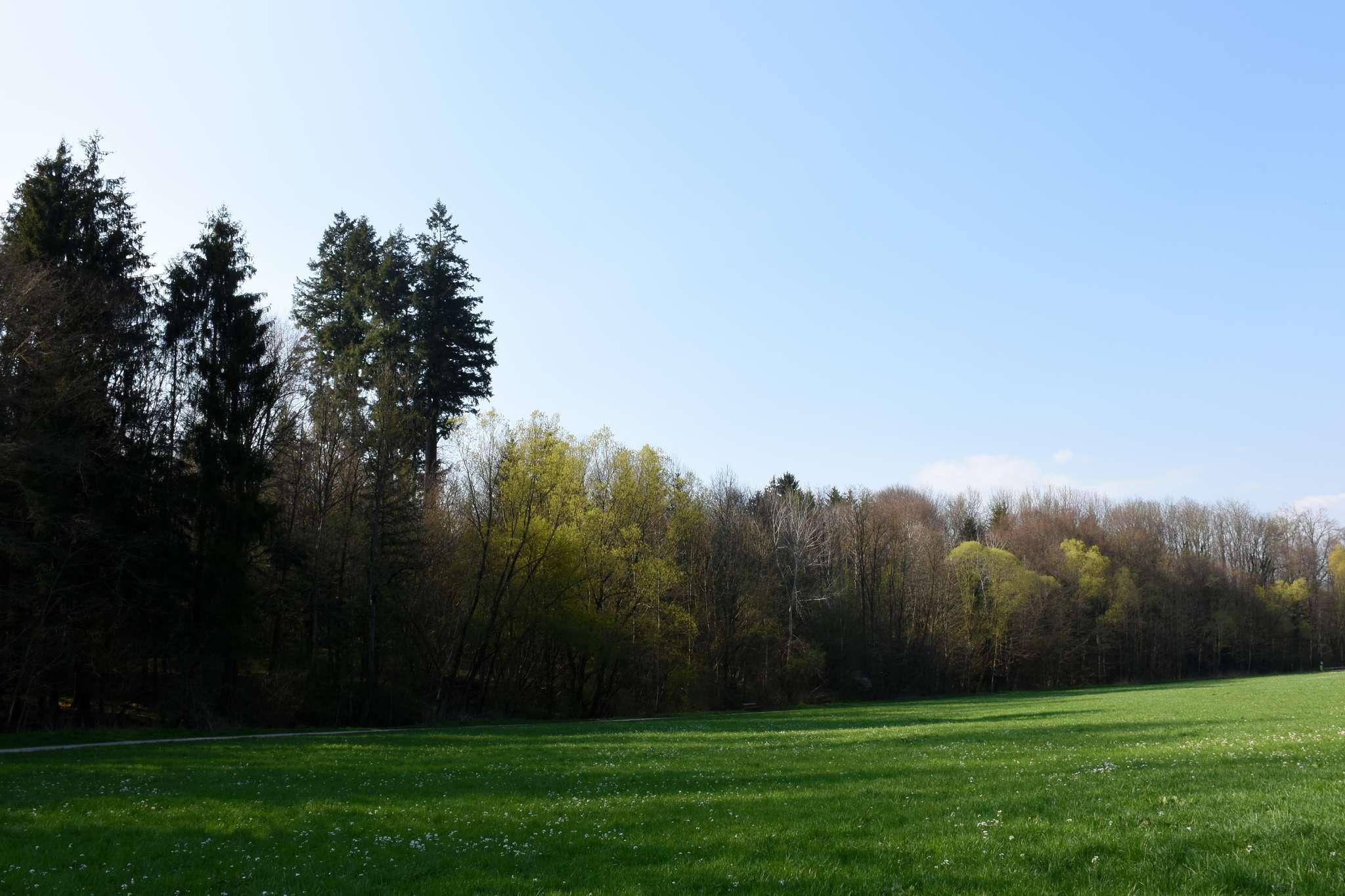 Direkt am beliebten Spazierweg entlang des Katzelbaches wachsen die Douglasien.