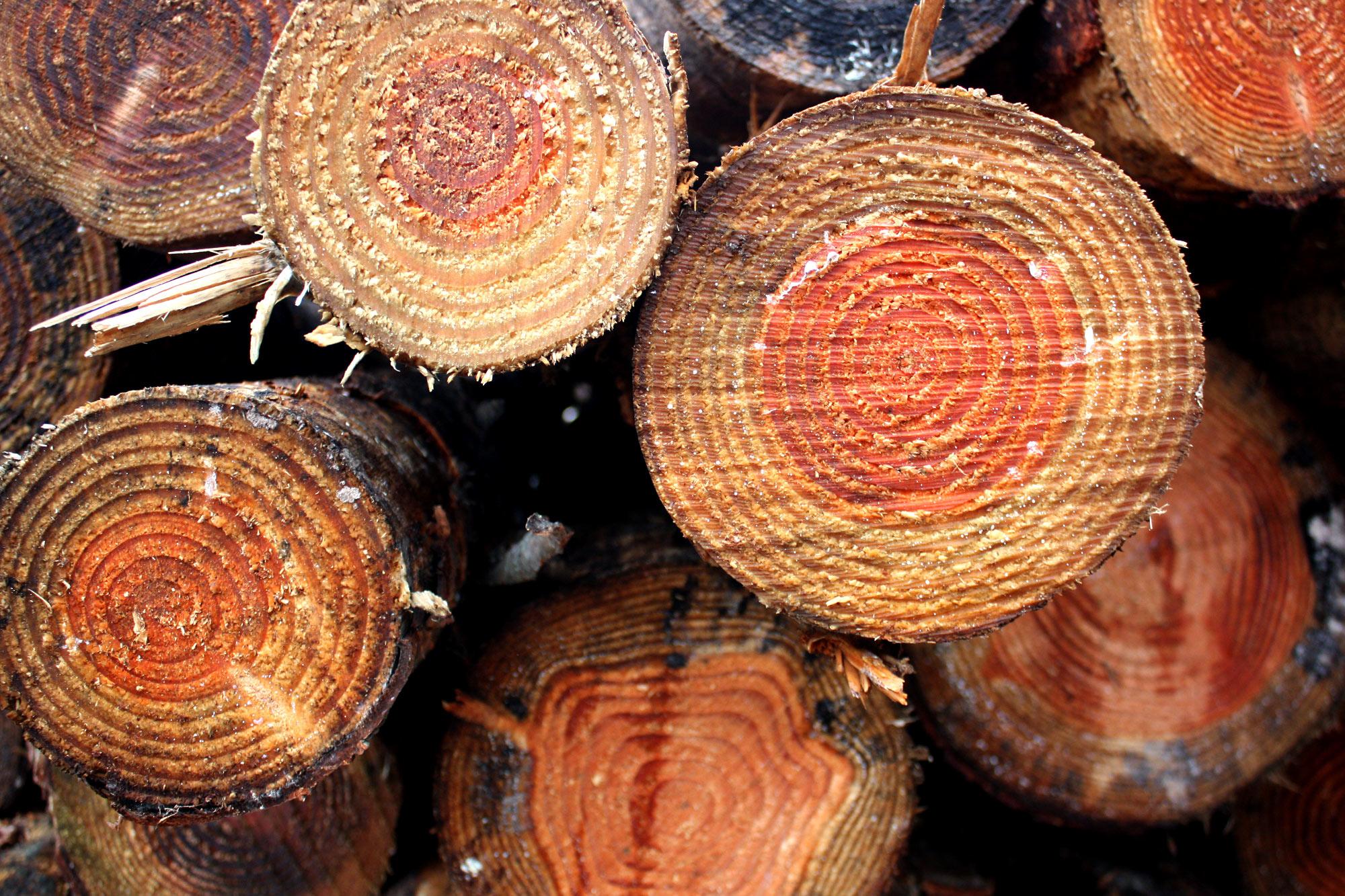 Das Holz der Douglasie ist vergleichbar mit Lärchenholz.