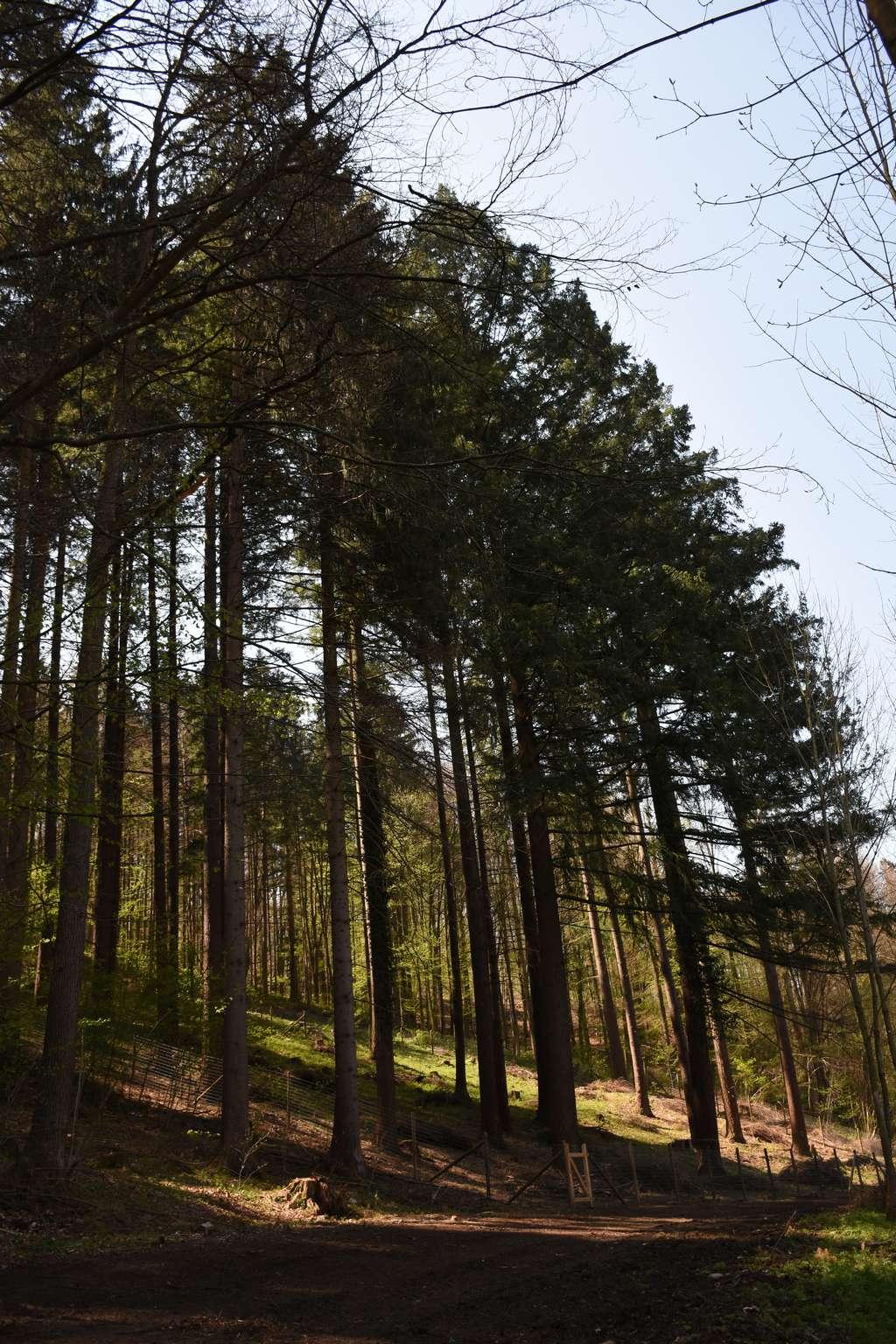 Ein Teil der Bäume wurde eingezäunt um zu überprüfen ob Verjüngung ohne Wildeinfluss aufkommen kann.